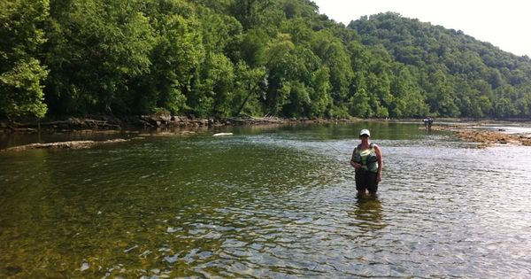 Fly fishing on the clinch river clinton tennessee fly for Clinch river fishing