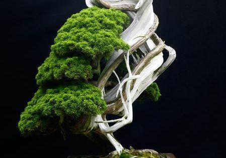 Juniper Bonsai Meaning
