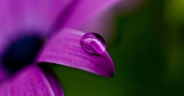 Water Drop On Flower 1920x1080 Windows 10 Hd Wallpaper Beautiful wallpaper hd water drop