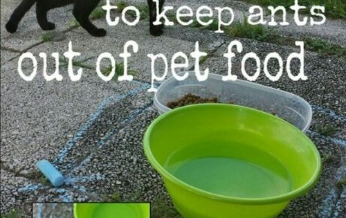 How To Repel Ants From Cat Food