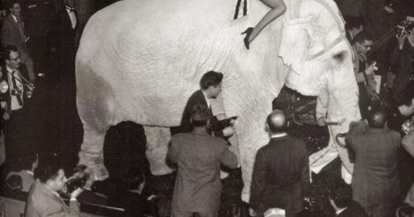 Marilyn Monroe At The Ringling Brothers Circus Charity Gala At Madison Square Garden March 30th