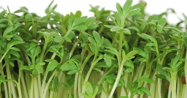 9 Sacred Herbs Herbs Medicinal Plants Healing Herbs