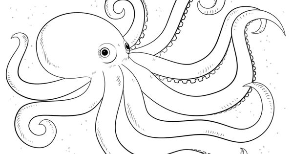 how to draw a octopus step by step for beginners