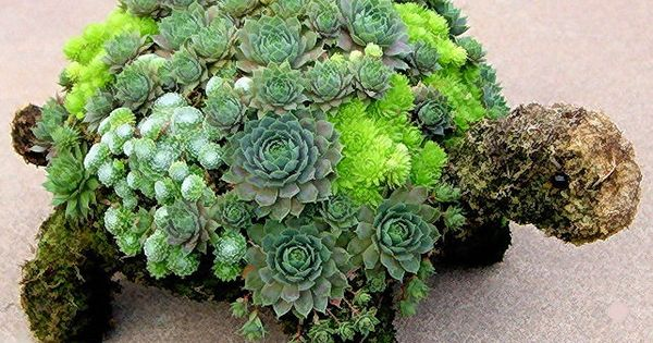 Succulent Turtle from 35 Indoor And Outdoor Succulent Garden Ideas @Cullum Roybal