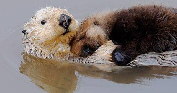 Cuddles otters | Animals | Pinterest | Cuddling, Otters ...