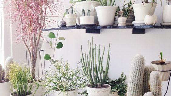 D corer avec les plantes des id es pour son int rieur int rieurs blancs cactus et fils - Decorer terras avec plantes ...