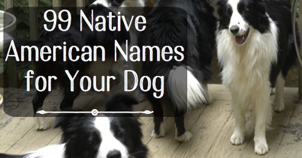 99 Native American Names For Male Dogs Dog Names Male Dog Names Strong Dog Names
