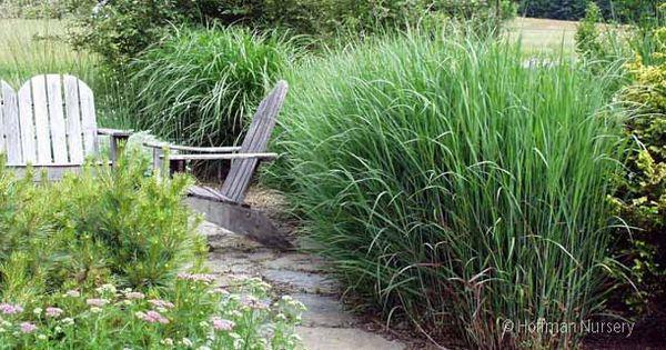 Bordure D 39 All E En Gramin Es Hautes Jardin Naturel Herb