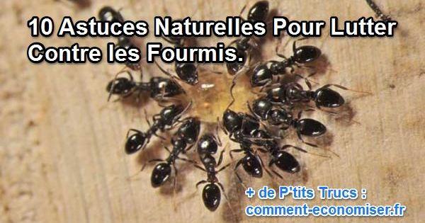 10 astuces naturelles pour lutter contre les fourmis for Astuce pour enlever le calcaire