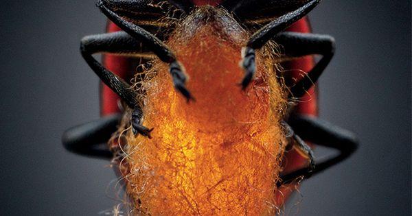Parasitic Images, Stock Photos & Vectors | Shutterstock  |Beautiful Parasites