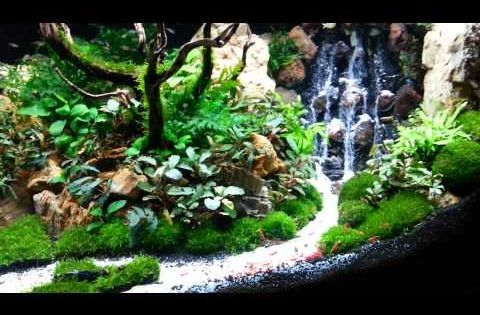 Top 300 best aquascape aquariums youtube fish tanks for Waterfall fish tank