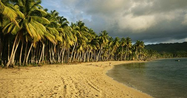 Palm Trees in The Dominican Republic