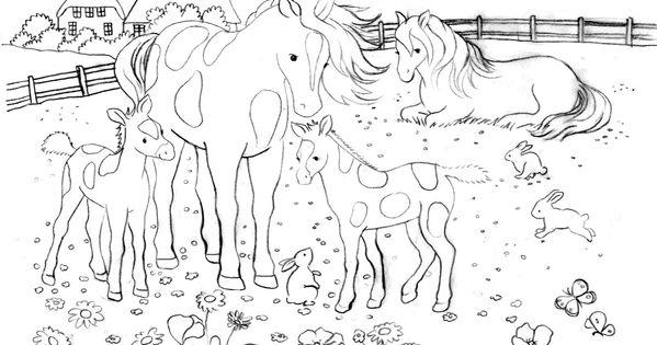 schöne ausmalbilder pferde  ausmalbilder für kinder