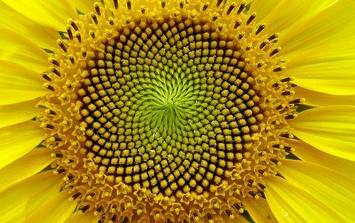 Sacred Geometry and Fibonacci Spiral | Alternative Paradigm