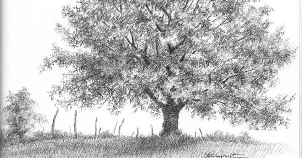 how to draw a realistic oak tree