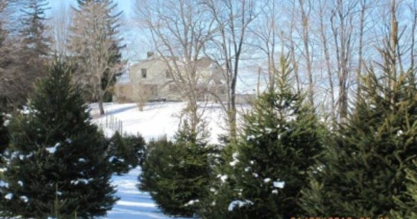 Abel S Trees Verbank Ny Tree Favorite Places Hudson Valley Ny