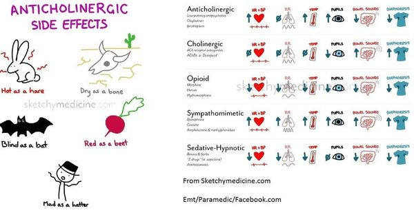 anticholinergic effects   rn - exit exam/nclex   pinterest   side, Skeleton