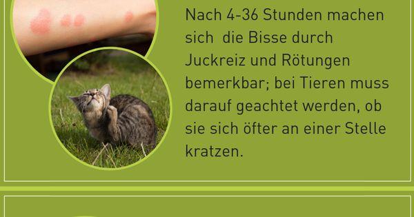 Grasmilben Mensch Hund Vor Stichen Schutzen Plantura Grasmilben Milben Gras