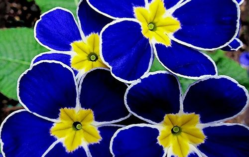 This beautiful blue flower photo was sent to me from a friend