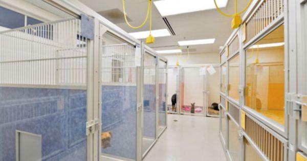 Preventive Health Includes People Too Hospital Design Hospital Design Animal Hospital Small Animal Hospital