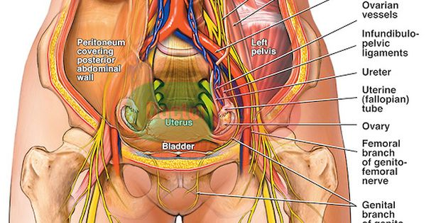 psoas and urinary bladder connection tight psoas | heal me,