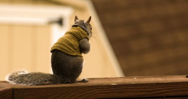 Sweater weather (I know it's a squirrel)