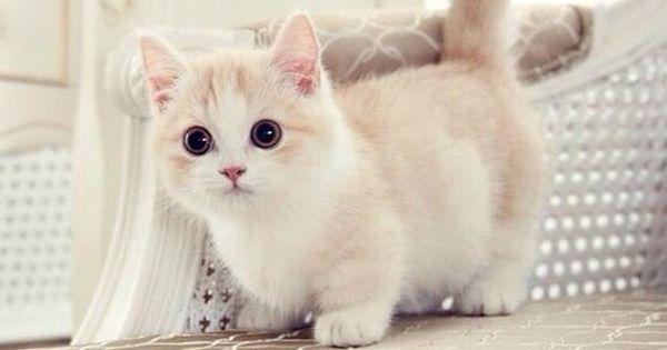 It's so fluffy!!!!!