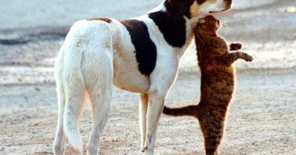 Happy Day Rt Ljgrealestate Linda J Gilland Animals Baby Dogs Animals Friends