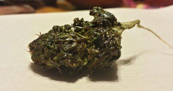 Fresh Honey Bud Sticky Icky Dab Wax Cannabis Caviar