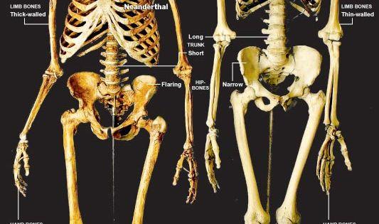 skeletons, side by side and modern on pinterest, Skeleton