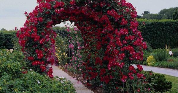 rosenbogen kletterrosen sorten gartenideen bunte rose pinterest rosenbogen kletterrosen. Black Bedroom Furniture Sets. Home Design Ideas