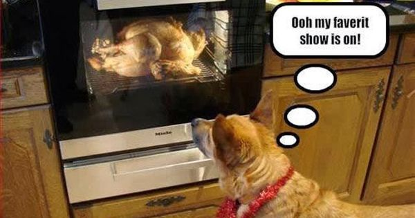 Favorite Show Is On Funny Thanksgiving Memes Funny Thanksgiving Pictures Dog Thanksgiving