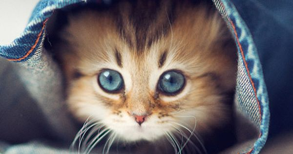 น้องเหมียว น่ารักไปป่ะ ? animal kitty cat cute