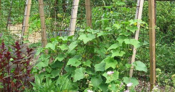 Http vegetable garden trellis for Vegetable garden trellis designs