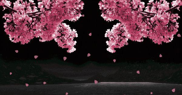 Unduh 75 Wallpaper Bunga Sakura Gif Hd Terlihat Keren Untuk Android Bunga Sakura Wallpaper Bunga Bunga