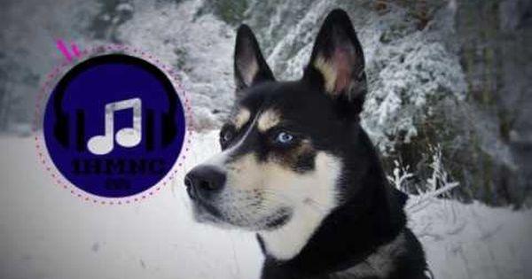 Voltox Skytale Prog House 1 Hour Extended Version Training Your Dog Dog Training Your Dog