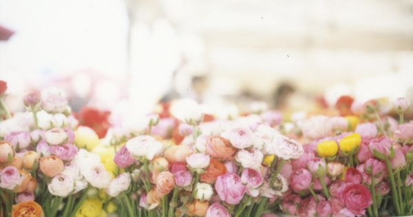 summer flower market ☼