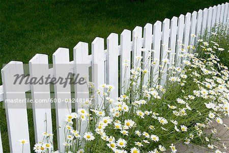 Daisies And White Picket Fence Stock Photos Dizajn Ogrady