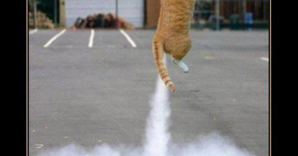 fart pictures funny   Funny Cats Farting   LOL ...