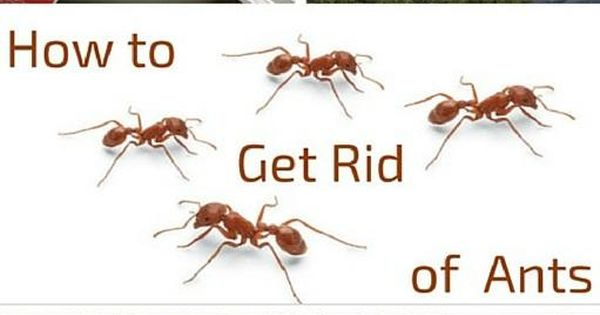 How To Get Rid Of Ants Home Hardware And The O 39 Jays