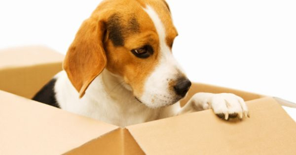 Tips For Moving With Pets Cross Country Moveacrosscountry Net Moving Relocation Tips Moving Cross Country Pets Moving Across Country