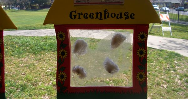 Growing beans you have your preschoolers dip a cotton - Put cotton ball trash can ...