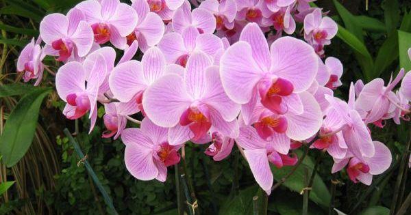 Comment Faire Refleurir Une Orchid E Art Floral Gardens And Planters