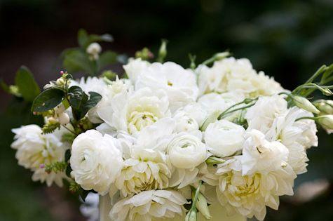 White on Beautiful Flowers| http://beautifulflowerscollections198.blogspot.com