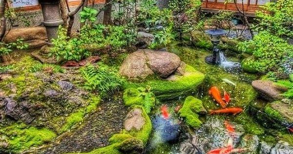 Estanque de las carpas paisaje pinterest plantas y for Carpas estanque