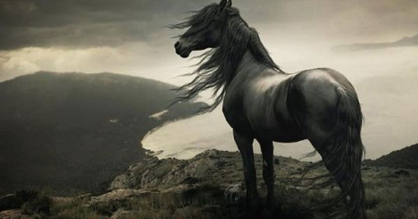 Wild heart - so majestic!!