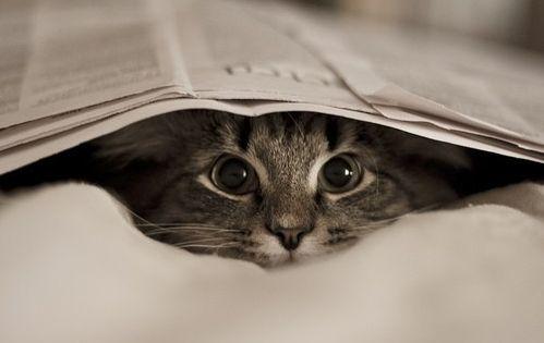 Lifestyle Of The Unemployed Kittens Cutest Animals Kittens
