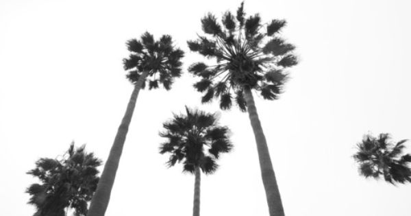 Saving Money And Staying Cool Palm Trees Tumblr Palm Trees Trees Tumblr