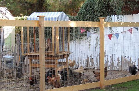 Chicken Fence Idea