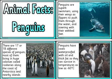 Free Animal Facts Printable Flashcards Or Posters Animal Facts Penguin Facts Penguin Information
